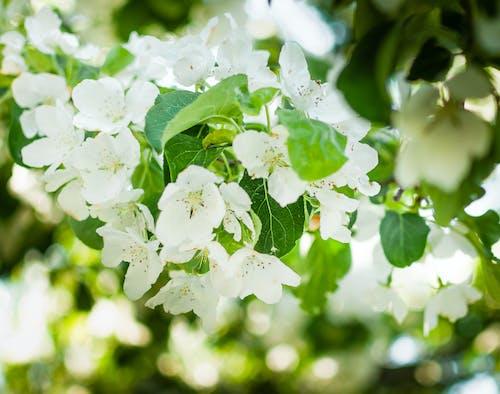 Kostnadsfri bild av blomma, naturlig