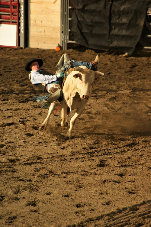 Man in Blue Shirt and Blue Denim Jeans Riding White Cow