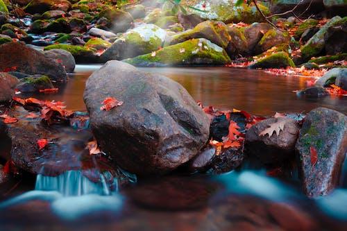 Free stock photo of autumn, beautiful, brook, calm