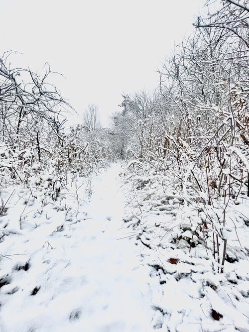 Free stock photo of heavy snow, snowscape, Snowy forest