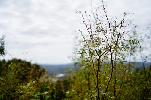 Free stock photo of central texas, hill country, mesquite bokeh