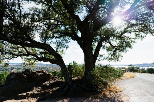 Free stock photo of central texas, hill country, landscape