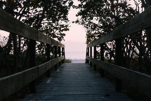Ingyenes stockfotó fa, óceán, part, sétány témában