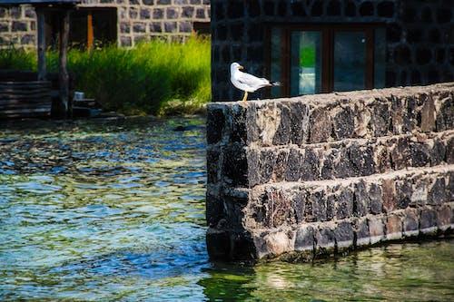 Free stock photo of bird, birds, followall