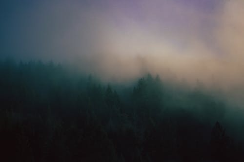 Overgrown trees in forest under foggy sky at sunset