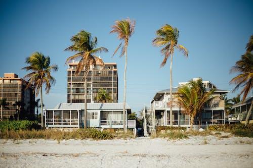 คลังภาพถ่ายฟรี ของ ชายทะเล, ชายฝั่งทะเล, ชายหาด, ต้นปาล์ม