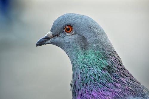 HDR, 동물, 멋진의 무료 스톡 사진