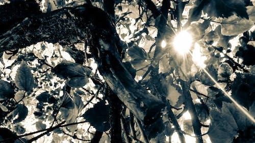 güneş ışığı, güneş ışını, kuru yapraklar, siyah arka plan içeren Ücretsiz stok fotoğraf
