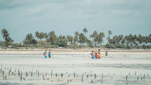 açık hava, ada, ada hayatı, boş zaman içeren Ücretsiz stok fotoğraf