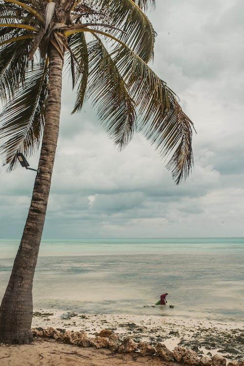 ada, ada hayatı, avuç içi, Balık tutmak içeren Ücretsiz stok fotoğraf