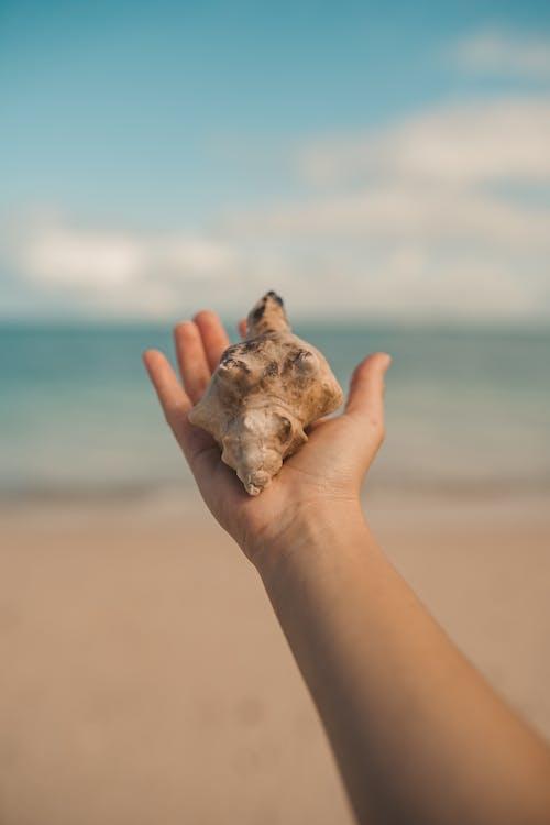 açık hava, ada, ada hayatı, dalga içeren Ücretsiz stok fotoğraf