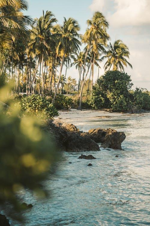 açık hava, ada hayatı, ağaç, avuç içi içeren Ücretsiz stok fotoğraf