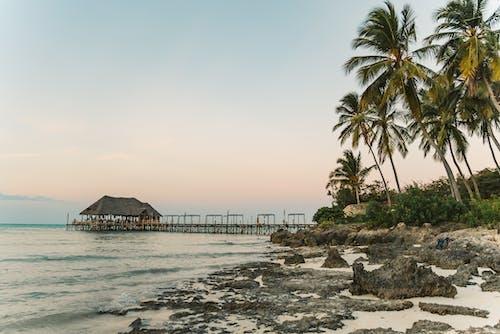 ada, ada hayatı, avuç içi, deniz içeren Ücretsiz stok fotoğraf