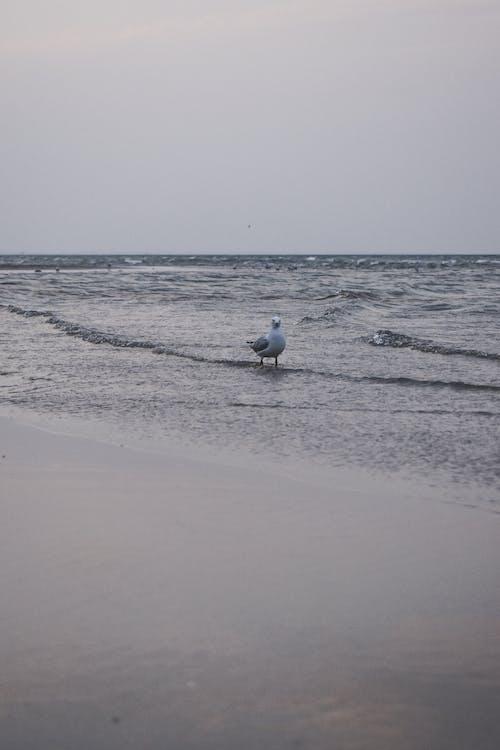 White Bird on Beach