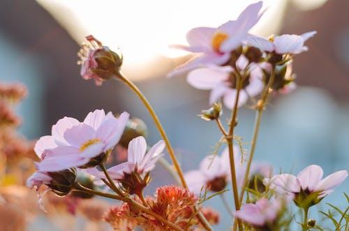 Blooming flowers growing on field