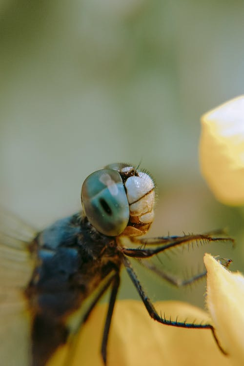 Dragonfly pollinating yellow flower in forest