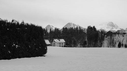Free stock photo of cold, gruyeres, snow
