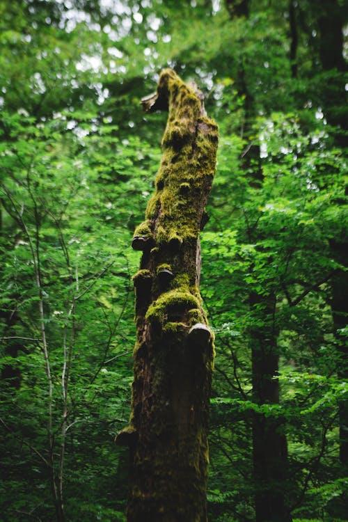 Foto profissional grátis de árvores, aumento, cogumelos