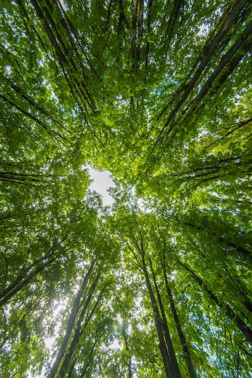 Gratis arkivbilde med skog