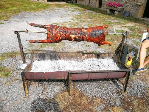 Gratis arkivbilde med brenne, gris grill