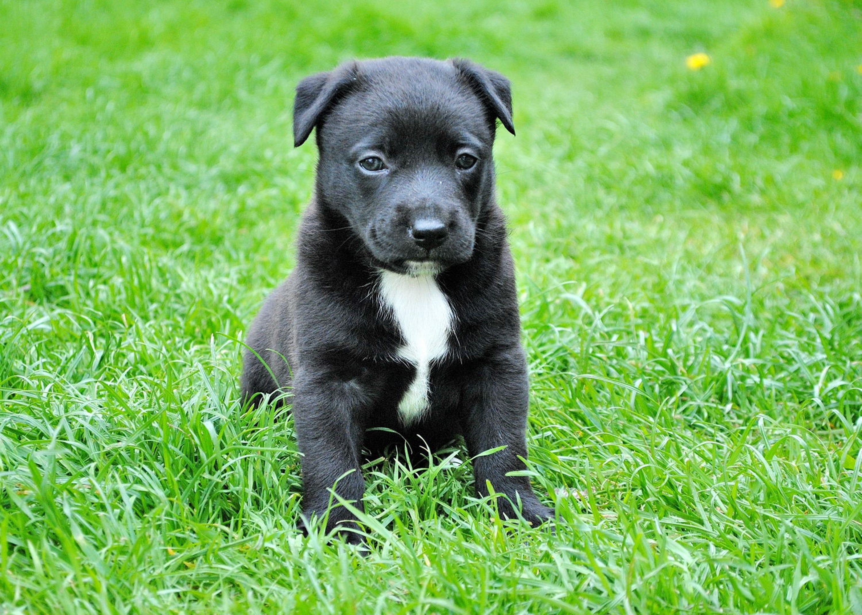 Black and White Short Coated Puppy Sitting on Green Grass
