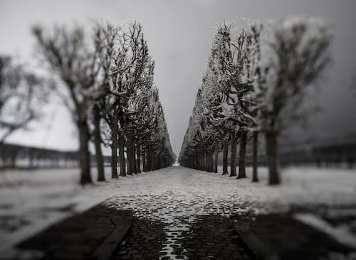 kış manzarası içeren Ücretsiz stok fotoğraf