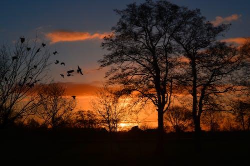 剪影, 天空, 日出, 日落 的 免費圖庫相片