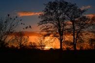 sky, sunset, trees