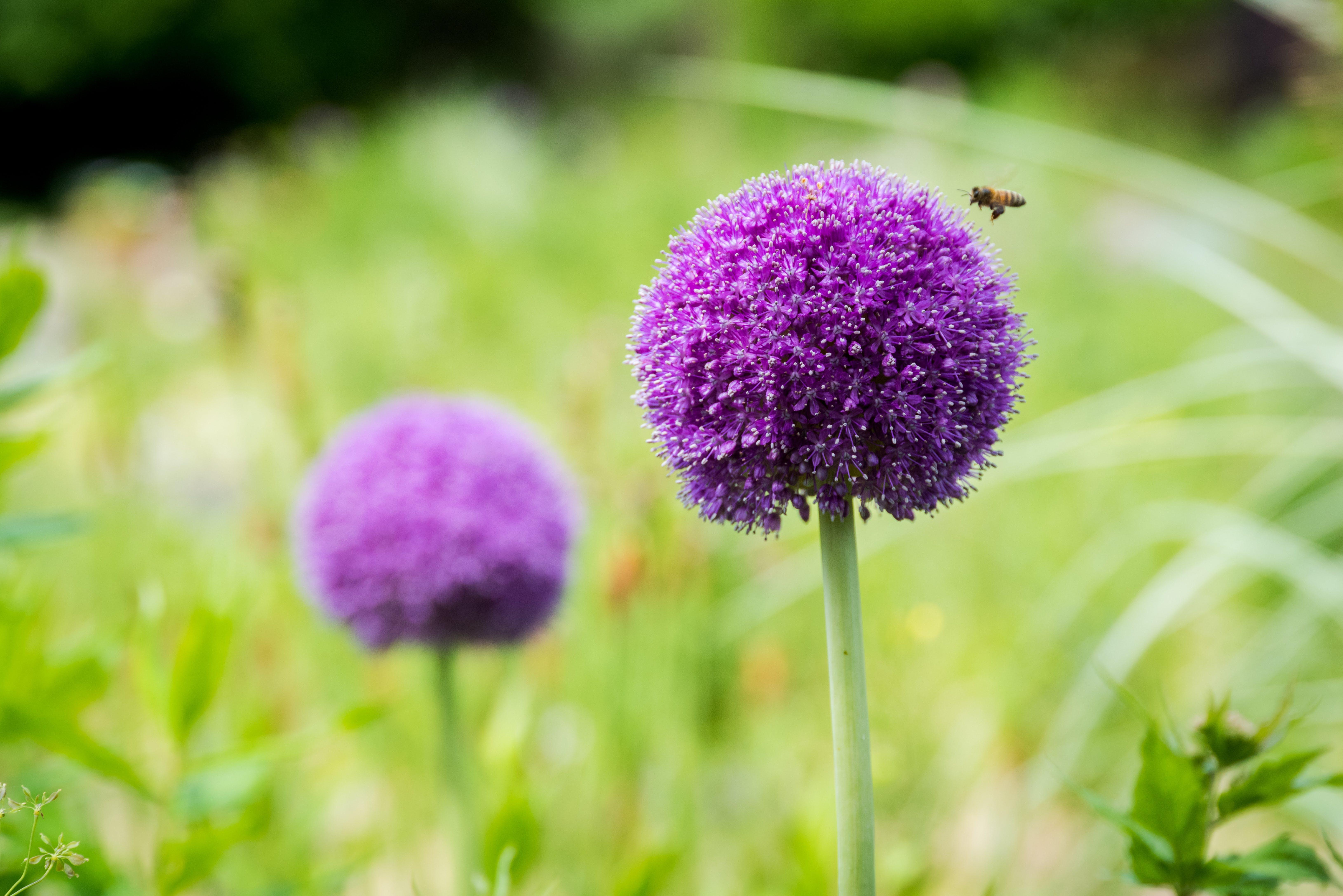 Gratis stockfoto met bij, bloeien, bloemblaadjes, bloemen