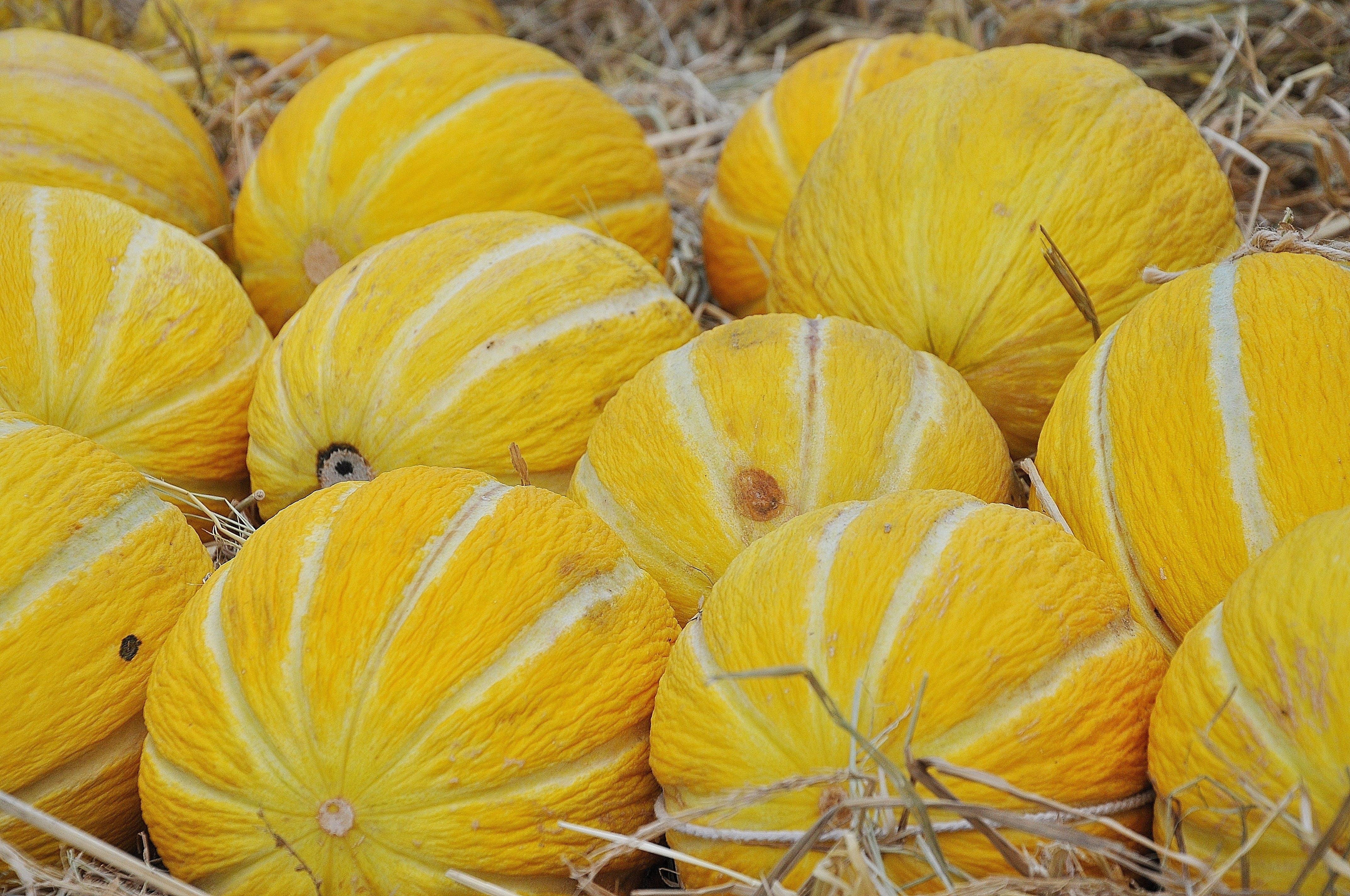 Yellow Fruit on Hay