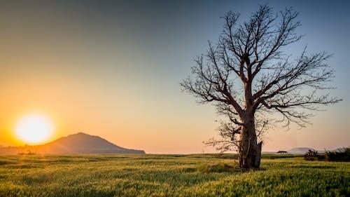 Kostnadsfri bild av bakgrundsbelyst, dagsljus, fält, gräs
