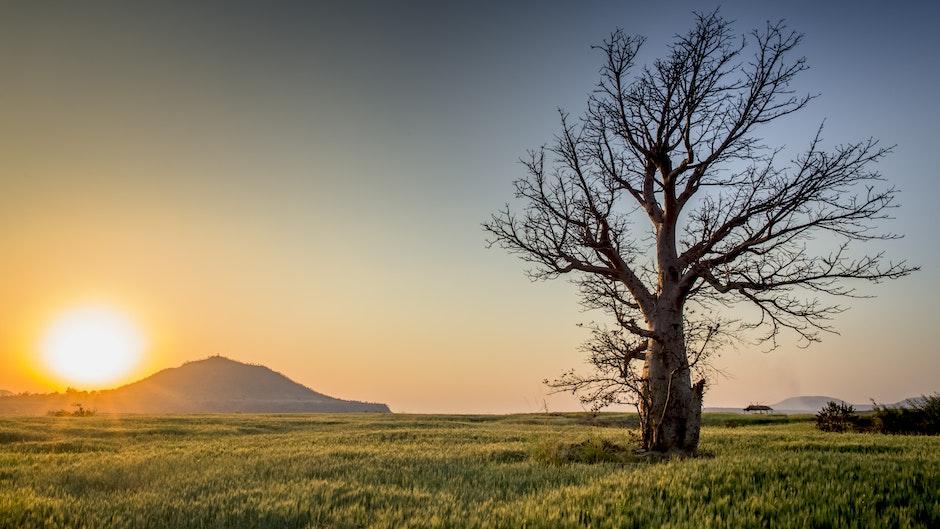 backlit, countryside, dawn