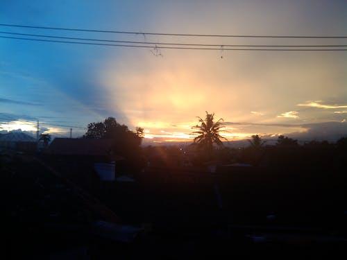 Free stock photo of kidzgn, palm, sun, sunrise