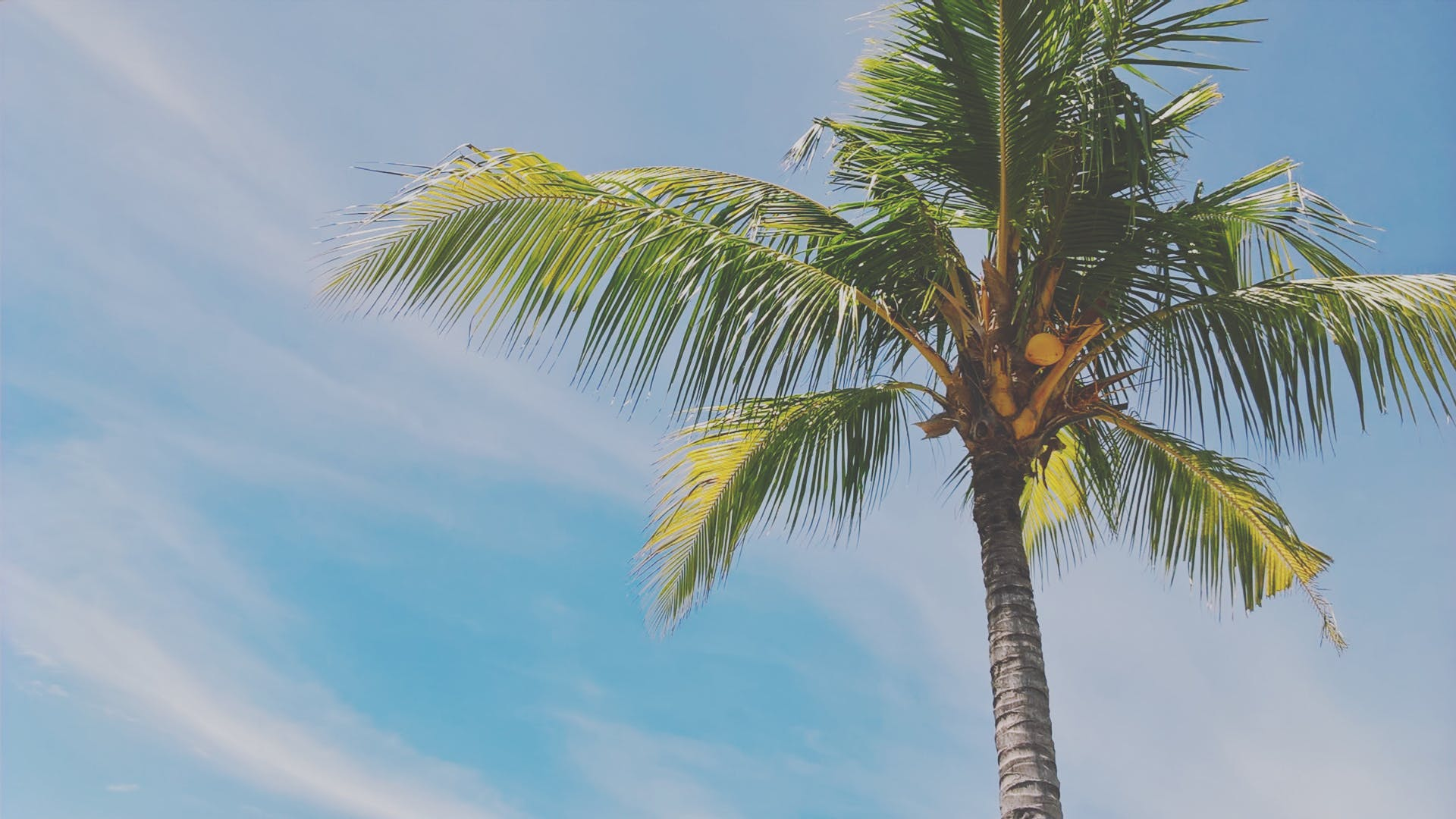 Free stock photo of palm, palm leaves, palm tree, summer