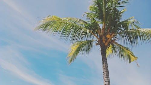 야자나무, 야자나무 잎, 여름, 여름 분위기의 무료 스톡 사진