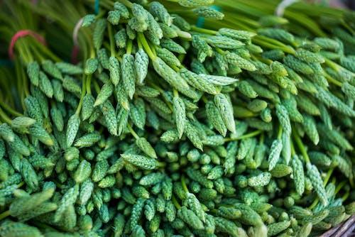 Market, sağlıklı, sebzeler, taze içeren Ücretsiz stok fotoğraf
