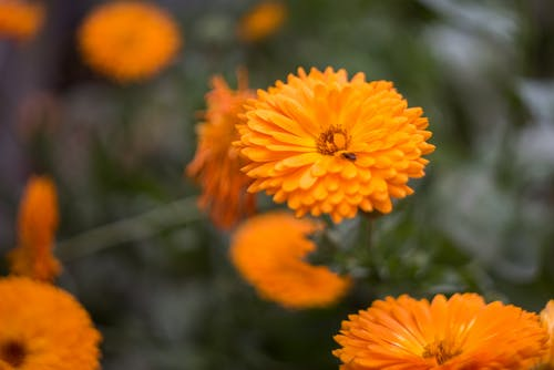 çiçek, Portakal, portakal rengi çiçek içeren Ücretsiz stok fotoğraf