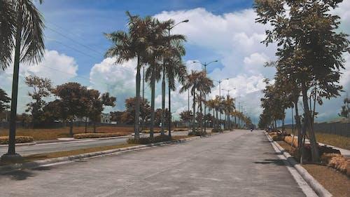 도로, 손바닥, 야자나무, 야자나무 잎의 무료 스톡 사진