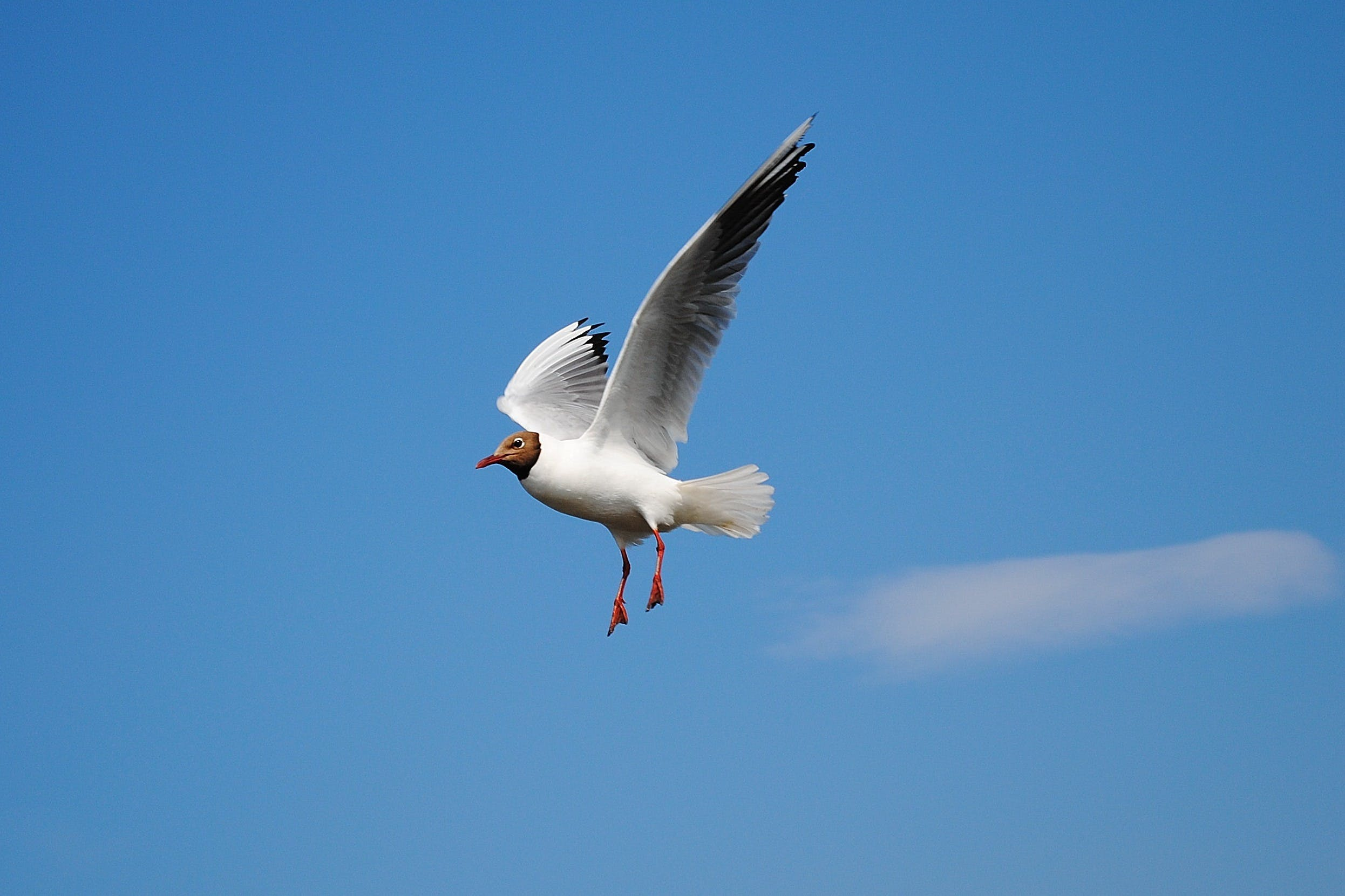 White Bird Flying Above Blue Skies during Daytime