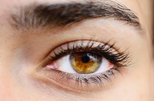 Gratis stockfoto met blik, bruine ogen, close-up