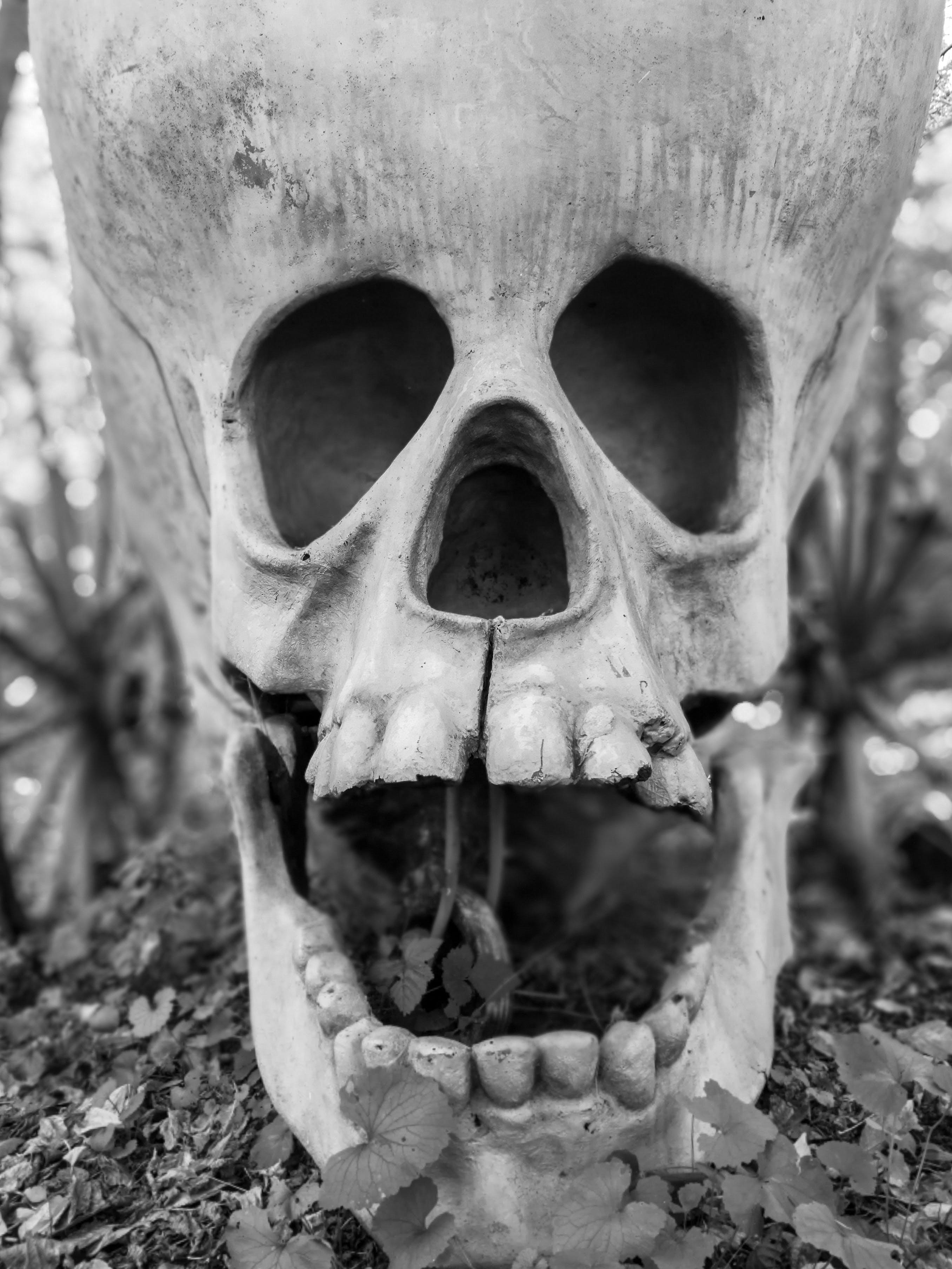 Free stock photo of death, skull