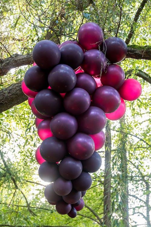 balonlar, dev üzüm, greyfurt, şarap içeren Ücretsiz stok fotoğraf