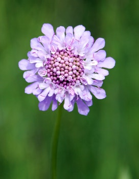 Purple Multi Petal Flower