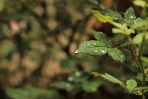 Free stock photo of after the rain, dew, rain, rain on leaf
