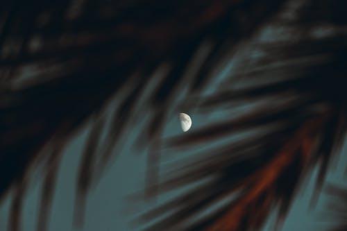 White and Black Half Moon