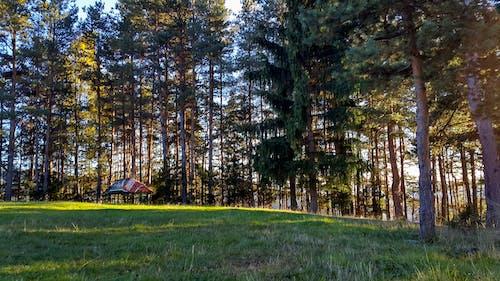 açık, ağaçlar, gün batımı, Güneş içeren Ücretsiz stok fotoğraf