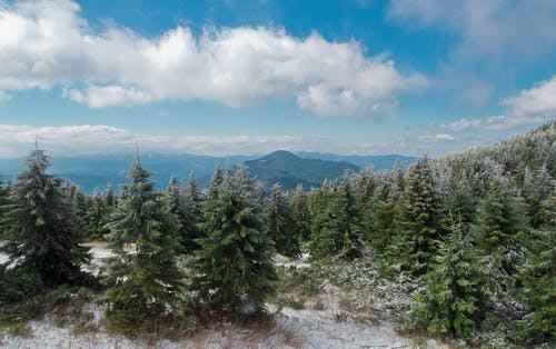 Coniferous forest on mountain in winter