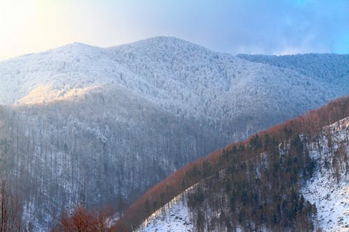 Snowy forest growing in mountainous area