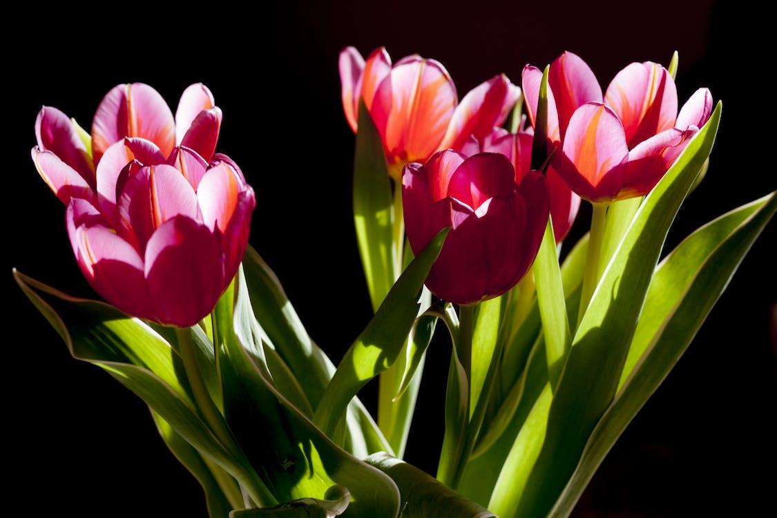flora, kwiat, kwiaty
