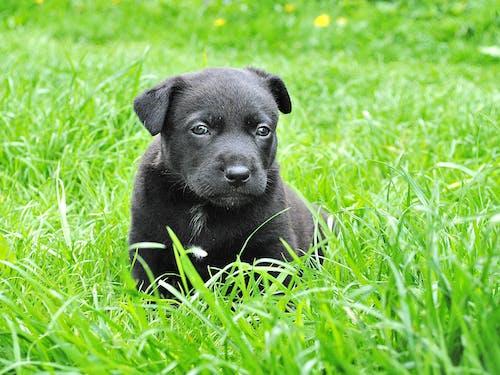 Безкоштовне стокове фото на тему «домашня тварина, милий, свійська тварина, собака»